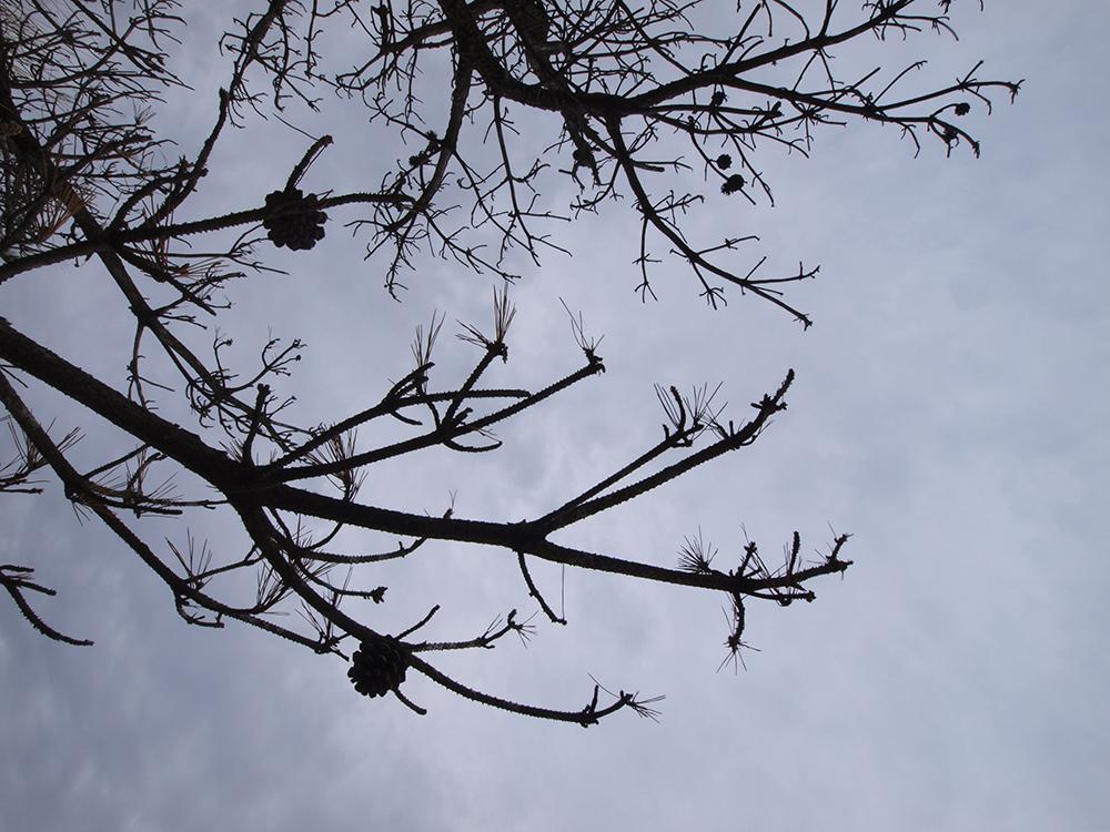 空に木枝のシルエット