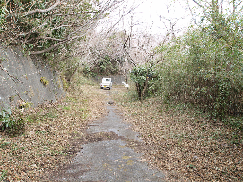 タヌキ、森の茂みに帰って行った
